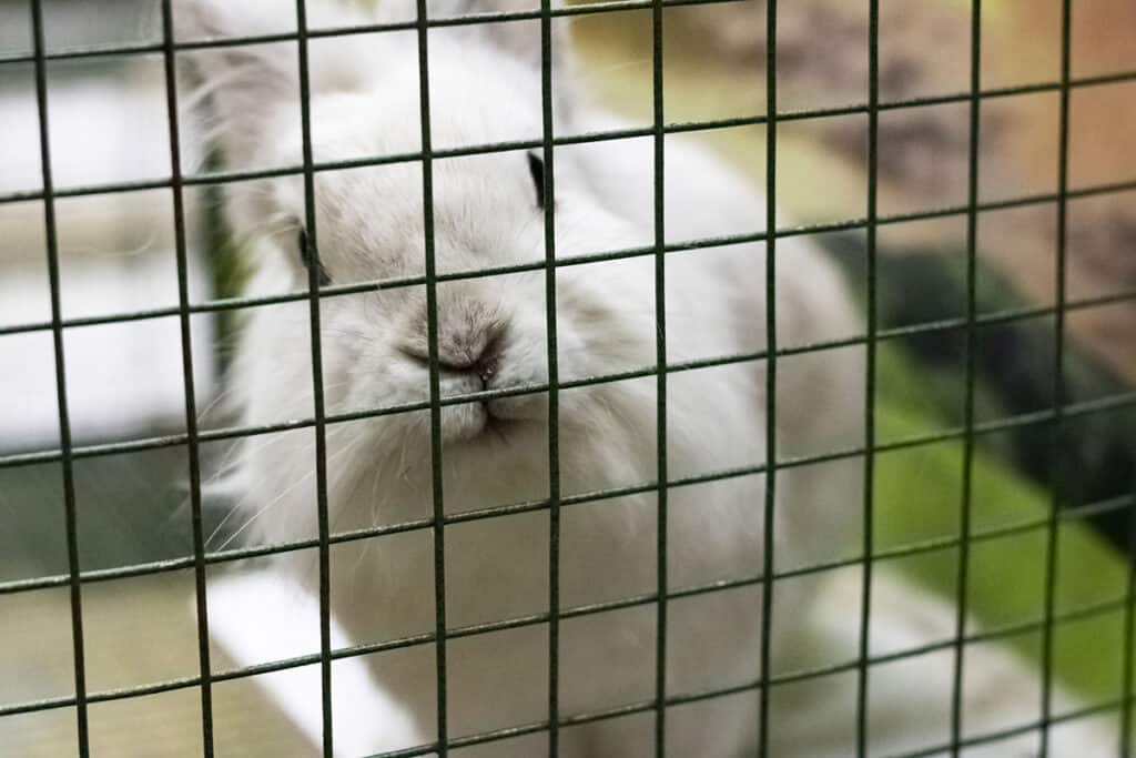 What to include in a rabbit playpen